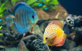Preview wallpaper Beautiful fish, underwater, blue and yellow