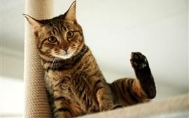 gato que senta-