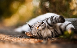 Preview wallpaper Cute cat, lying road, mustache, nose, paws, bokeh