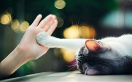 Preview wallpaper Cute cat touch hand palm, bokeh