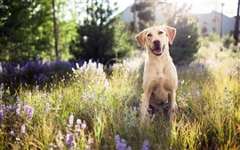 Preview wallpaper Cute dog, look, grass, summer