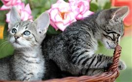 壁紙のプレビュー かわいい子猫、バスケット、ピンクのバラ