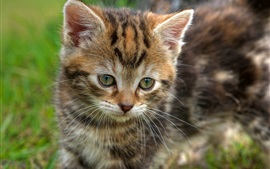 Милый котенок, лицо, глаза, боке
