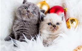 Gray cat, white cat, Christmas balls