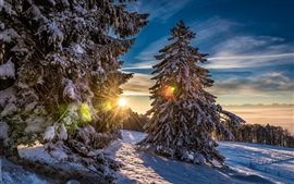 Grenchenberg, Switzerland, forest, winter, snow, sunset