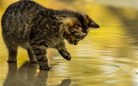 Kitten touch water