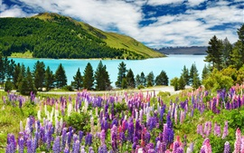 Lavender, mountains, lake, clouds