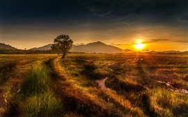 Nature landscape, sunset, tree, hill, grass, stream