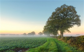 Nature scenery, fields, trees, mist, morning, summer