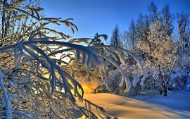 Thick snow, trees, winter, sunlight