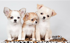 Preview wallpaper Three dogs, cute