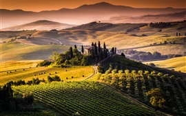 Preview wallpaper Tuscany, Italy, fields, hills, trees, sunrise, morning