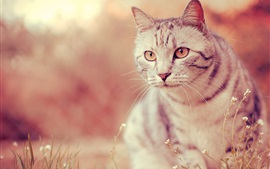 Preview wallpaper White cat, eyes, whiskers, grass, blur