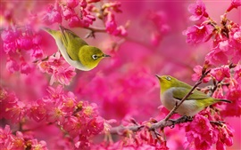 Preview wallpaper White-eye birds, red flowers, tree