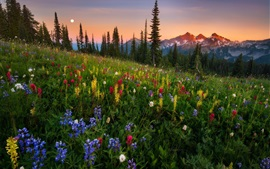 Preview wallpaper Wildflowers, mountains, sunset, nature landscape