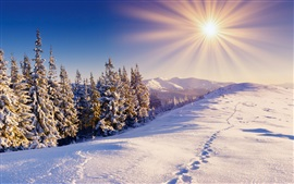 Winter, snow, forest, trails, mountains, sky, sun