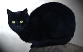 Preview wallpaper Black cat, yellow eyes, stone