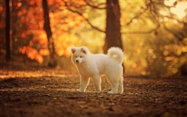 Cute white dog, autumn, trees