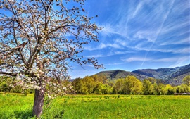 Fields, mountains, apple tree, spring, sky