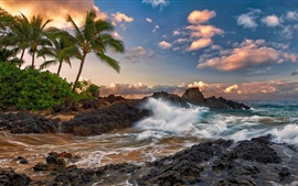 Preview wallpaper Maui, Hawaii, quiet, ocean, rocks, palm trees, beach