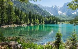 Montaña, bosque, árboles, lago, piedras