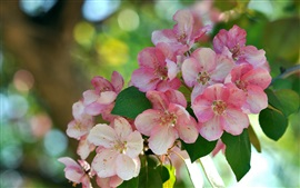 Preview wallpaper Pink flowers, branch, blossom