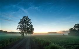 Road, поля, трава, туман, деревья, рассвет