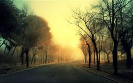 Camino, árboles, niebla, mañana