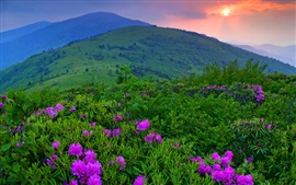 Preview wallpaper Sunset, mountains, flowers, grass, trees