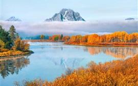 США, штат Вайоминг, Гранд Тетон Национальный парк, деревья, туман, осень