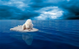 Preview wallpaper White polar bear, ice, despair, sea, blue