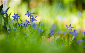 Preview wallpaper Blue orchid flowers, summer, green