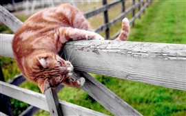 Preview wallpaper Cat climb fence