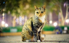 Preview wallpaper Cat, eyes, evening, lights