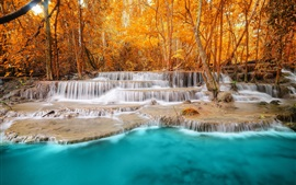 Forest, trees, river, waterfalls, autumn