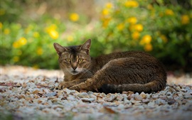 Preview wallpaper Gray-brown cat, rest, sight