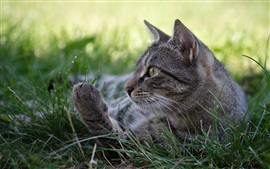 Preview wallpaper Gray cat, sleep, grass