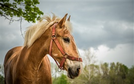 Preview wallpaper Horse, portrait