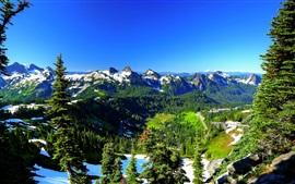 壁紙のプレビュー レーニア山、アメリカ、春、木、山、雪