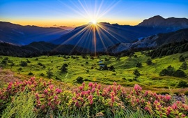 Preview wallpaper Mountains, meadow, sunrise, flowers, beautiful scenery