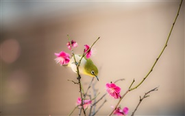 Preview wallpaper Peach blossom, pink flowers, bird, spring