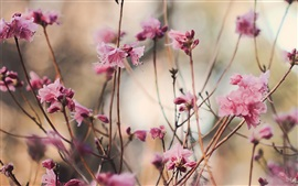 Preview wallpaper Peach blossom, pink flowers, spring, twigs