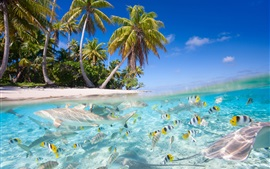 Tropical scenery, sea, beach, palm trees, fish, sharks