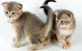 Preview wallpaper Two kittens, cute pet
