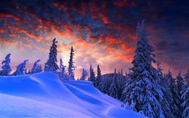 Winter, thick snow, red sky, clouds, trees, dusk