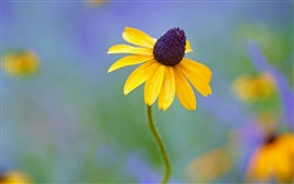 Preview wallpaper Yellow flowers, rudbeckia