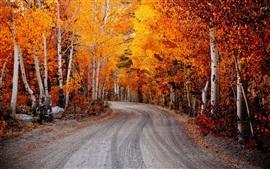 Aperçu fond d'écran Birch, feuilles rouges, automne, route