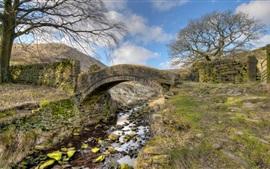 Bridge, rio, grama, cenário da natureza