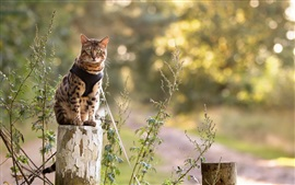 Cat sit on stump Wallpapers Pictures Photos Images