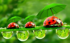 Preview wallpaper Creative pictures, water droplets, dew, ladybugs, umbrellas